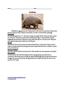 Echidna - Monotreme - Review Article Questions Facts Vocabulary Word Search