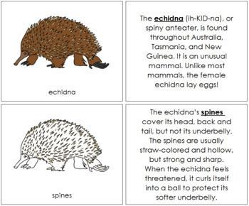 Echidna Nomenclature Book