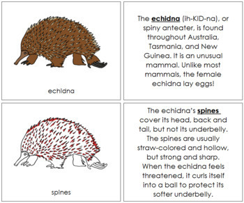 Echidna Nomenclature Book - Red