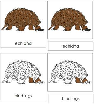 Echidna Nomenclature Cards