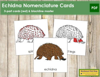 Echidna Nomenclature Cards (Red)