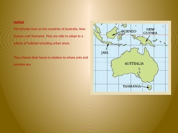 Echidna - Power Point - Facts Pictures Information