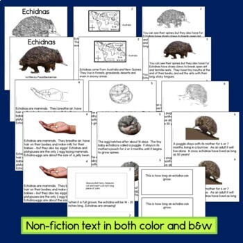 Echidnas Non-fiction Guided Reading Book and Craftivity
