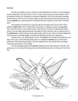 Echinoderm Coloring Packet