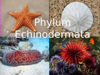 Echinoderm Powerpoint