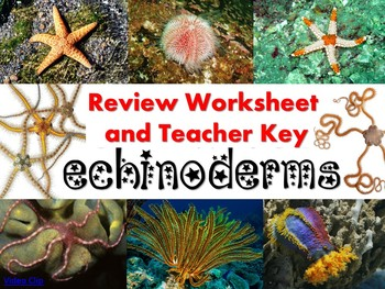 Echinoderm Review Worksheet for Biology or Zoology