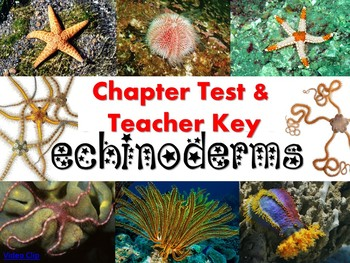 Echinoderm (Sea stars, urchins, etc.) Test for Biology or Zoology