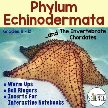 Echinodermata Echinoderms Warm Ups Bell Ringers Interactive