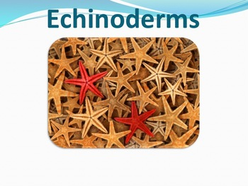 Echinoderms - Marine Life Vol. 4 - Slideshow Powerpoint Presentation