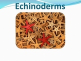 Echinoderms - Marine Life Vol. 4 - Slideshow Powerpoint Pr