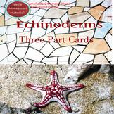 Echinoderms - Montessori 3 - Part Cards