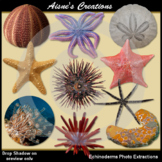 Echinoderms Real Photo Clip Art