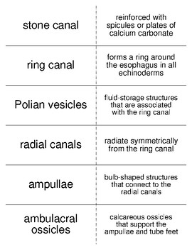 Echinoderms Vocabulary Flash Cards for Invertebrate Biology