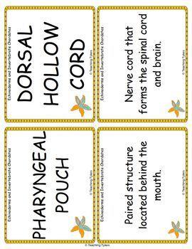 Echinoderms and Invertebrate Chordates Vocabulary Cards