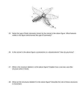 Echinoderms and Invertebrate Chordates Exam