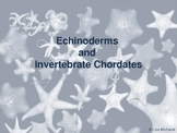 Echinoderms and Invertebrate Chordates PowerPoint Lesson Plan