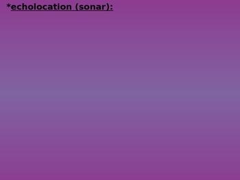 Echolocation (sound) PowerPoint