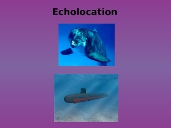 Echolocation (sound) PowerPoint