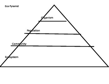 EcoPyramid