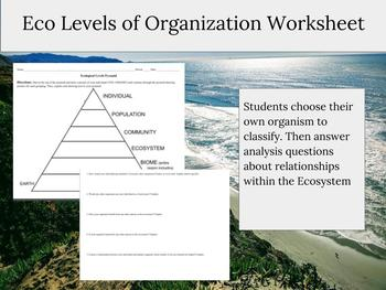Levels of Organization in an Ecosystem besides Worksheet  levels of organization worksheet  Levels Of Organization further Levels of Biological Organization   10 Levels of Organization furthermore  in addition Ecological Levels of Organization Worksheet by Middle Science LP moreover Miller section 3 1  intro to ecology also Antonyms Medium To Large Size Of S le Lesson Plan For Synonyms And further Levels Of Biological Organization Graphic Organizer Worksheet additionally Early Levels Of Biological Organization Worksheets Worksheet Answers likewise  besides  in addition Potion Ecology 4 CHAPTER   ppt video online download likewise About Free Ecology Worksheets For Middle Levels Of Ecological moreover Printable Worksheets For Kids Ecology Free Kindergarten Writing further Levels Of organization Worksheet   Siteraven likewise New AQA Ecology Spec  Food Chains  Levels of Organisation   Trophic. on levels of organization ecology worksheet