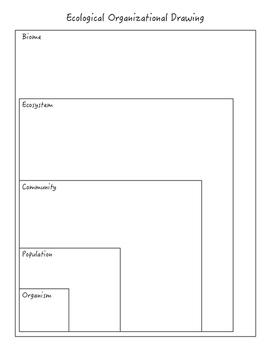 Ecological Organization Levels WS
