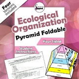 Ecological Organization Pyramid 3-D Foldable - 4 Versions, Collapses to Store