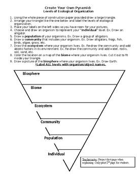 Ecological Organization Pyramid