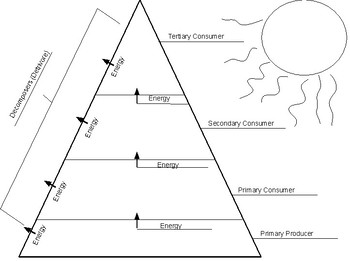 Ecological Pyramid Answer Key
