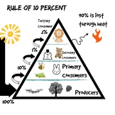 Ecological Pyramid Picture