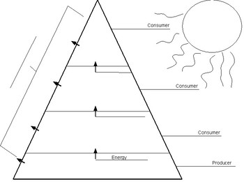 Ecological Pyramid Worksheet