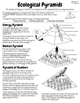 ecological pyramids by cell fie science teachers pay teachers. Black Bedroom Furniture Sets. Home Design Ideas