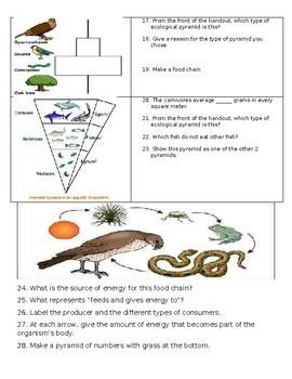 Ecological Pyramids Assignment