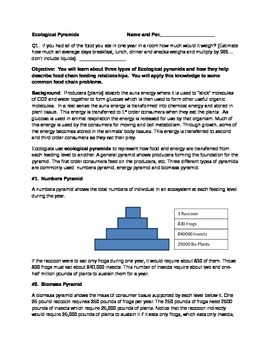 Ecological Pyramids Worksheet
