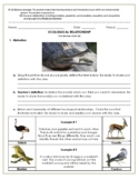 Ecological Relationships Teaching Resources | Teachers Pay ...