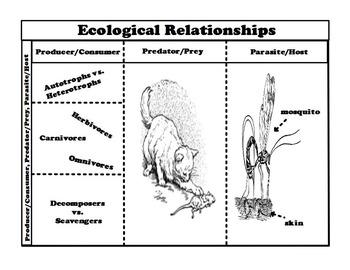Ecological Relationships Foldable