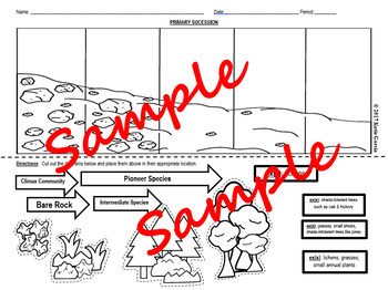 Ecological Succession:  Primary & Secondary - Two Cut Out Activities