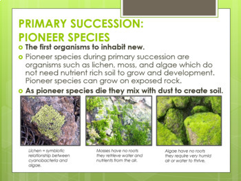 Ecological Succession (Primary and Secondary) Editable Powerpoint