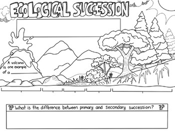 Ecological Succession Sketch Notes Diagram by Creativity Meets Cognition