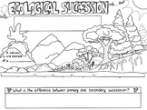 Ecological Succession Sketch Notes Diagram