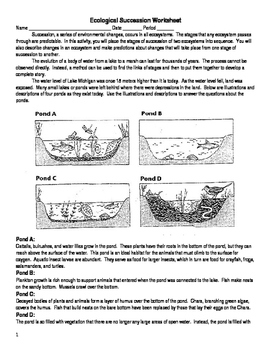 Ecological Succession Worksheet by Bates Science | TpT