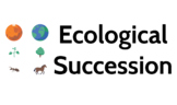 Ecological succession (to brainstorm - for thinkers)
