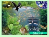 Ecology (basic/intro)