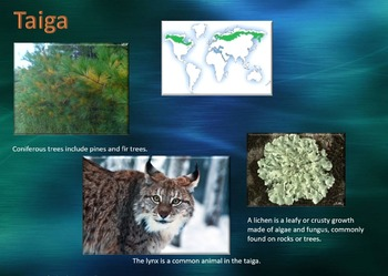 Ecology 4 PowerPoint, Writing Activity, & Group Activities