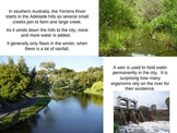Ecology Activity Energy Transfer Food Web Torrens River