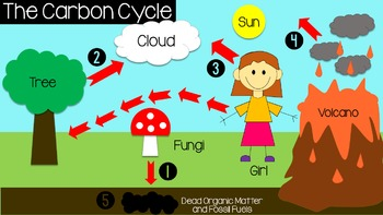Ecology: Biogeochemical Cycles (Carbon, Nitrogen, and Water)