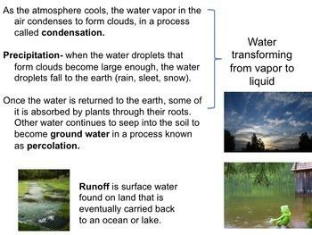 Ecology Worksheets: Biogeochemical Cycles Bundle
