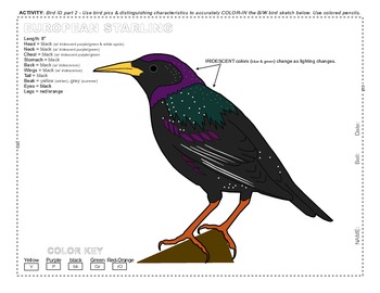 Ecology Birds ID 01 SURFFDOGGY