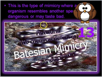 Ecology, Camouflage and Mimicry Quiz Game