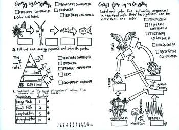 Energy Pyramids Worksheet Teaching Resources Teachers Pay Teachers