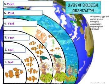 Ecology- Digital Bundle for Google Drive